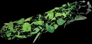 cucumber_black