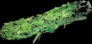Cucumber Explosion
